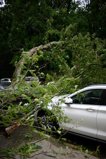 A tree branch on top of a car from a recent storm or hurricane