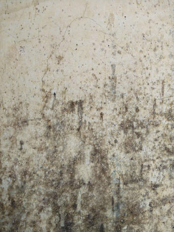 A large patch of mold in a home