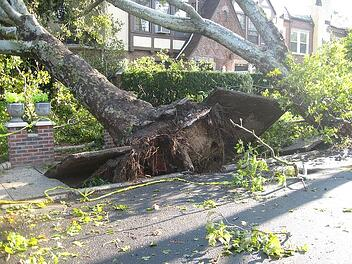 A toppled tree rips up the sidewalk after a major storm