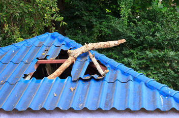 A fallen tree causes damage to a roof.