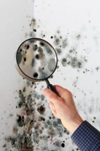 Black mold, the most dangerous variant, thrives in high-moisture environments.