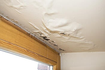 Water damage has stripped the paint off of a ceiling, revealing the first signs of mold damage
