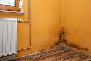 Mold is found in a New Jersey home, which will need remediation.