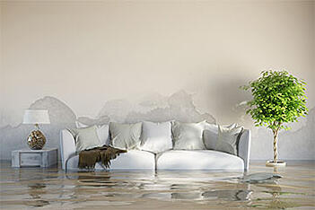 Water damage in a living room, resulting in mold damage