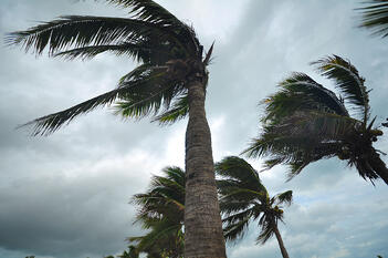 A storm blows through palm trees in Florida.