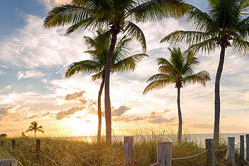 Palm trees at a Fort Lauderdale beach