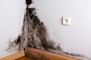 Water damage and mold appear together in a South Florida home.