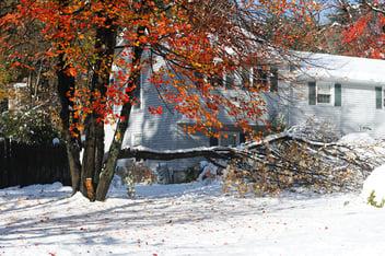 A fallen tree damaging the façade of a house after a winter storm